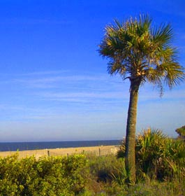 Palm tree at Tybee Island ocean