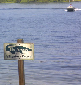 Alligators in GA lake