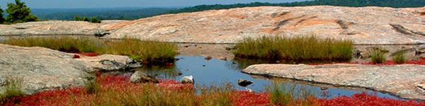 Arabia Mountain in Dekalb County Georgia