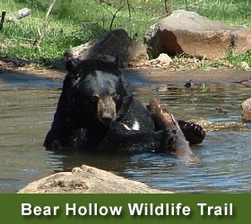 Bear at Bear Hollow Wildlife Trail