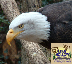 Eagle at Bear Hollow Wildlife Trail