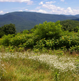 Mountain scenery at Cohutta Overlook
