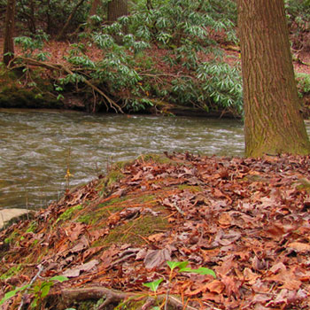 Cooper Creek Recreation Area