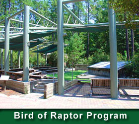 Bird of Raptor Program