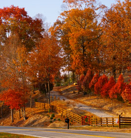 Brilliant Roadside Colors in GA