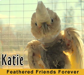 Katie the Parrot at Feathered Friends Parrot Rescue