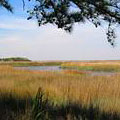 Marsh at Fort McAllister Historic State Park