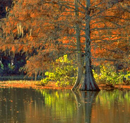 Lake and Cypress Trees at Georgia Veterans State Park