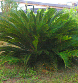 Lush plant at Little Tybee Island