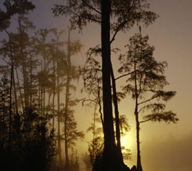 Okefenokee NWR at Night