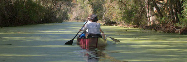 Canoeing at the Okefenokee NWR