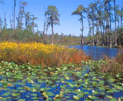 Scenery at Okefenokee National Wildlife Refuge