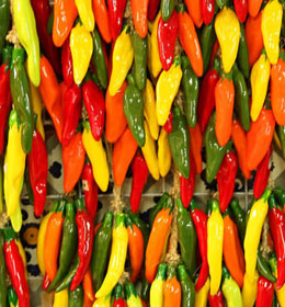 Colorful spicy peppers