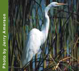 Egret at Piedmont National Wildlife Refuge