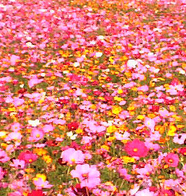 Pink flowers in park field