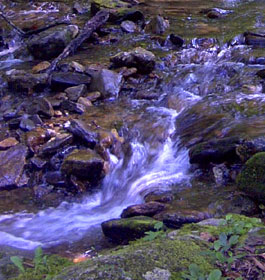 Rushing creek in GA forest
