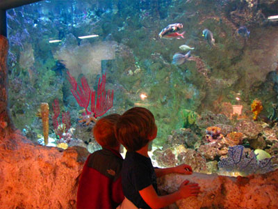 Sandy Creek Nature Center Aquarium