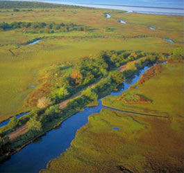 Areal View of Sapelo Island