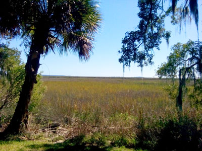 Scenery at Sapelo Island Visitor Center
