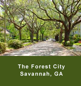 The Forest City in Savannah GA