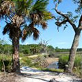 Nature Trail at Skidaway Island State Park