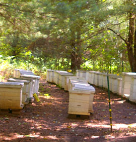 Bee homes at park