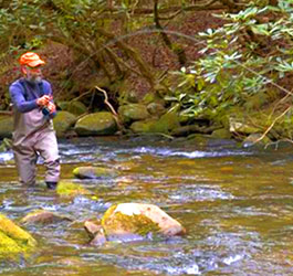 White county georgia parks for Trout fishing in helen ga