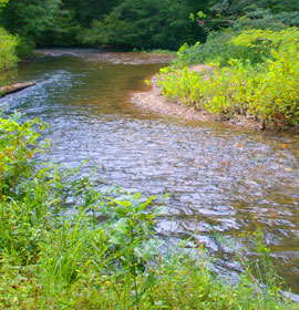 River at Smithgall Woods