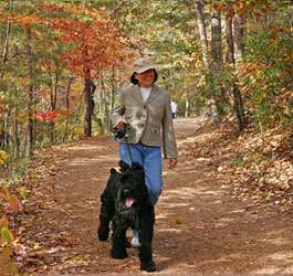Walking dog at Tallulah Gorge State Park