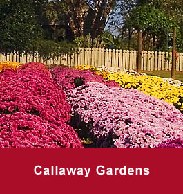 Callaway Gardens Flowers